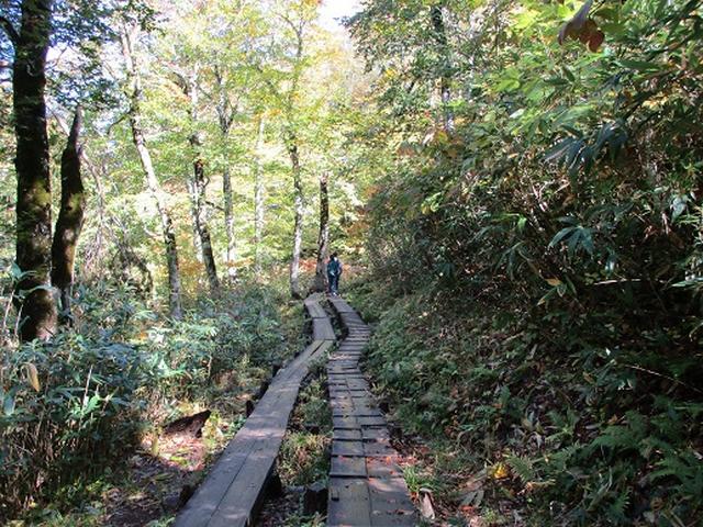 画像2: 【山旅会・登山ガイドこだわりツアー】岡田ガイドからの便り・尾瀬燧裏林道ツアーの下見にいってまいりました!