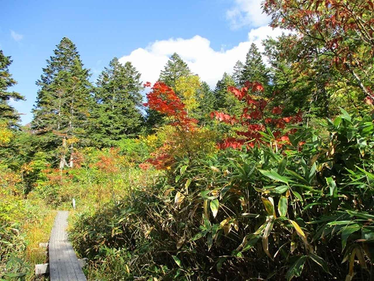 画像10: 【山旅会・登山ガイドこだわりツアー】岡田ガイドからの便り・尾瀬燧裏林道ツアーの下見にいってまいりました!