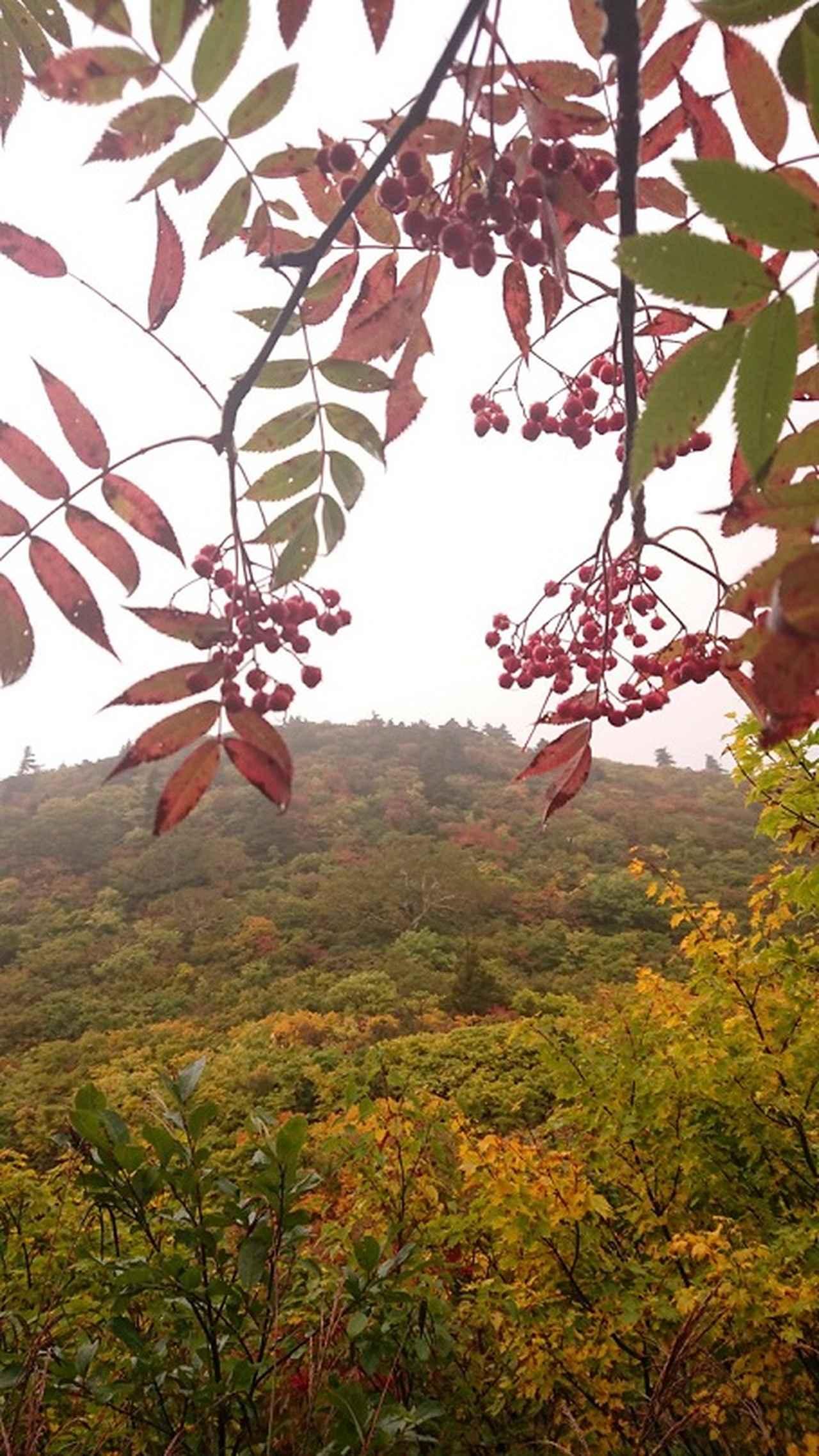 画像9: 【山旅会・登山ガイドこだわりツアー】添乗員からの便り・蔵王と栗駒山のハイキングにいってまいりました!