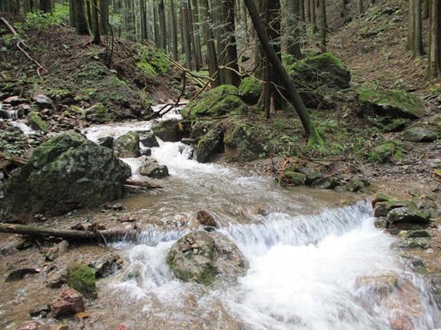 画像10: 【山旅会・登山ガイドこだわりツアー】岡田ガイドからの便り・伊豆ヶ岳の下見にいってまいりました!