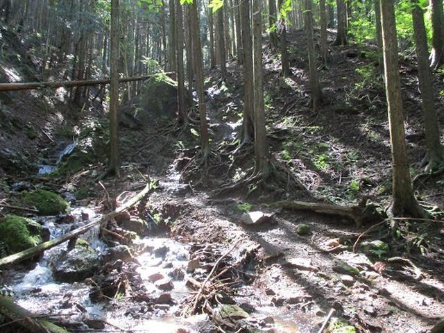 画像4: 【山旅会・登山ガイドこだわりツアー】岡田ガイドからの便り・伊豆ヶ岳の下見にいってまいりました!