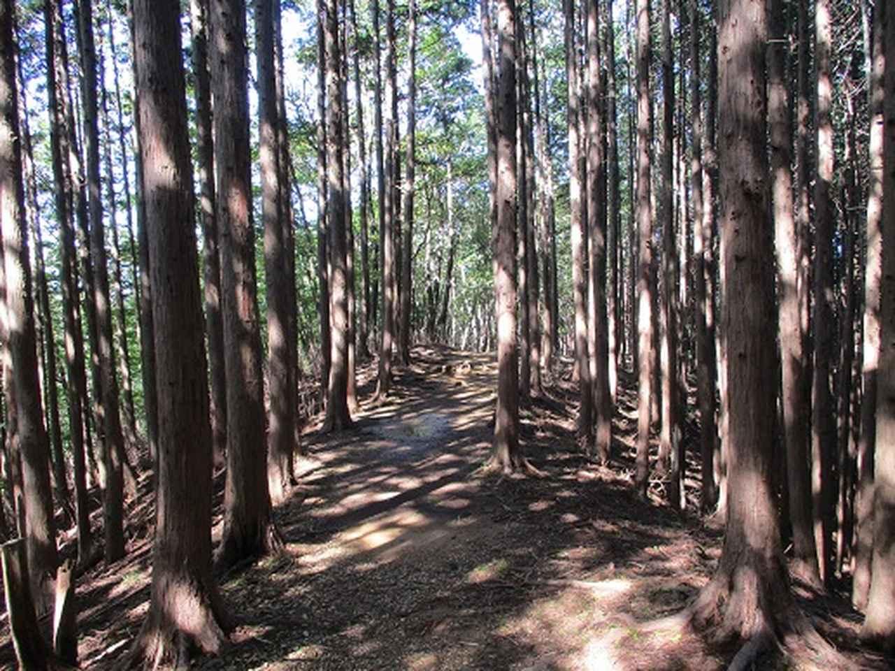 画像9: 【山旅会・登山ガイドこだわりツアー】岡田ガイドからの便り・伊豆ヶ岳の下見にいってまいりました!