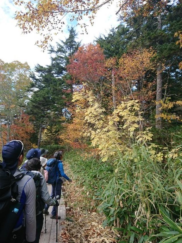 画像8: 【山旅会・登山ガイドこだわりツアー】添乗員からの便り・大清水から尾瀬沼