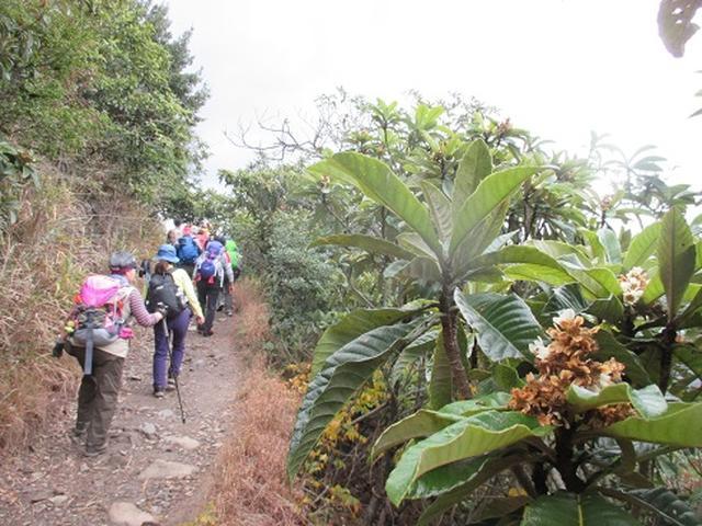 画像2: 【山旅会・登山ガイドこだわりツアー】岡田ガイドからの便り・飯野山と小豆島ツアーのご案内