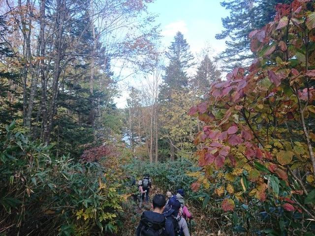 画像6: 【山旅会・登山ガイドこだわりツアー】添乗員からの便り・大清水から尾瀬沼