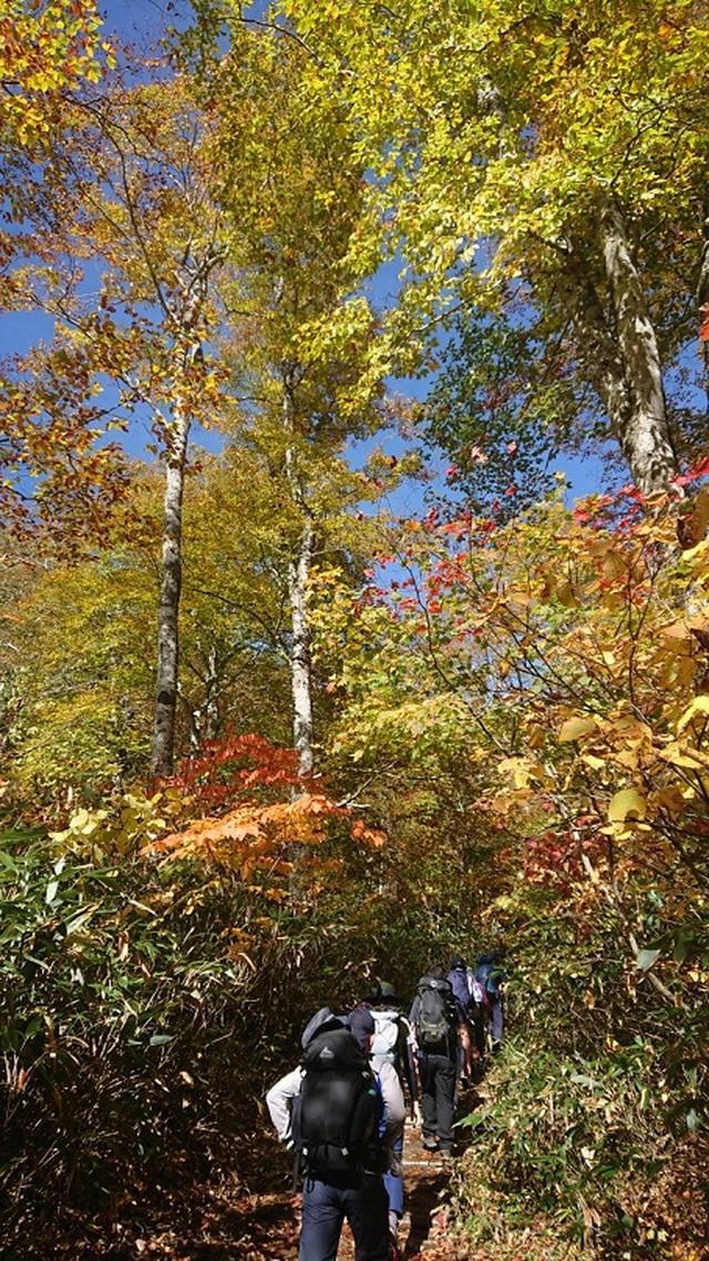 画像3: 【山旅会・登山ガイドこだわりツアー】添乗員からの便り・大清水から尾瀬沼