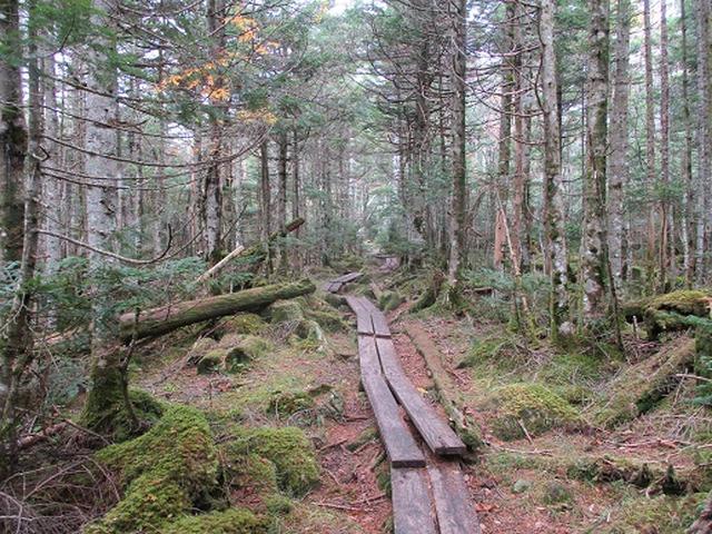 画像2: 【山旅会・登山ガイドこだわりツアー】岡田ガイドからの便り・麦草峠から五辻ツアーの下見にいってまいりました!
