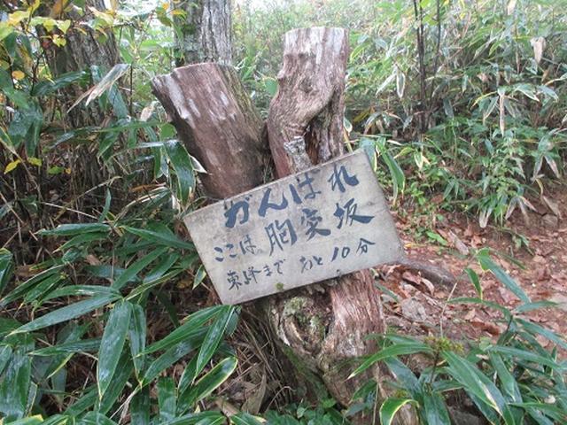 画像5: 【山旅会・登山ガイドこだわりツアー】岡田ガイドからの便り・守屋山の下見にいってまいりました!