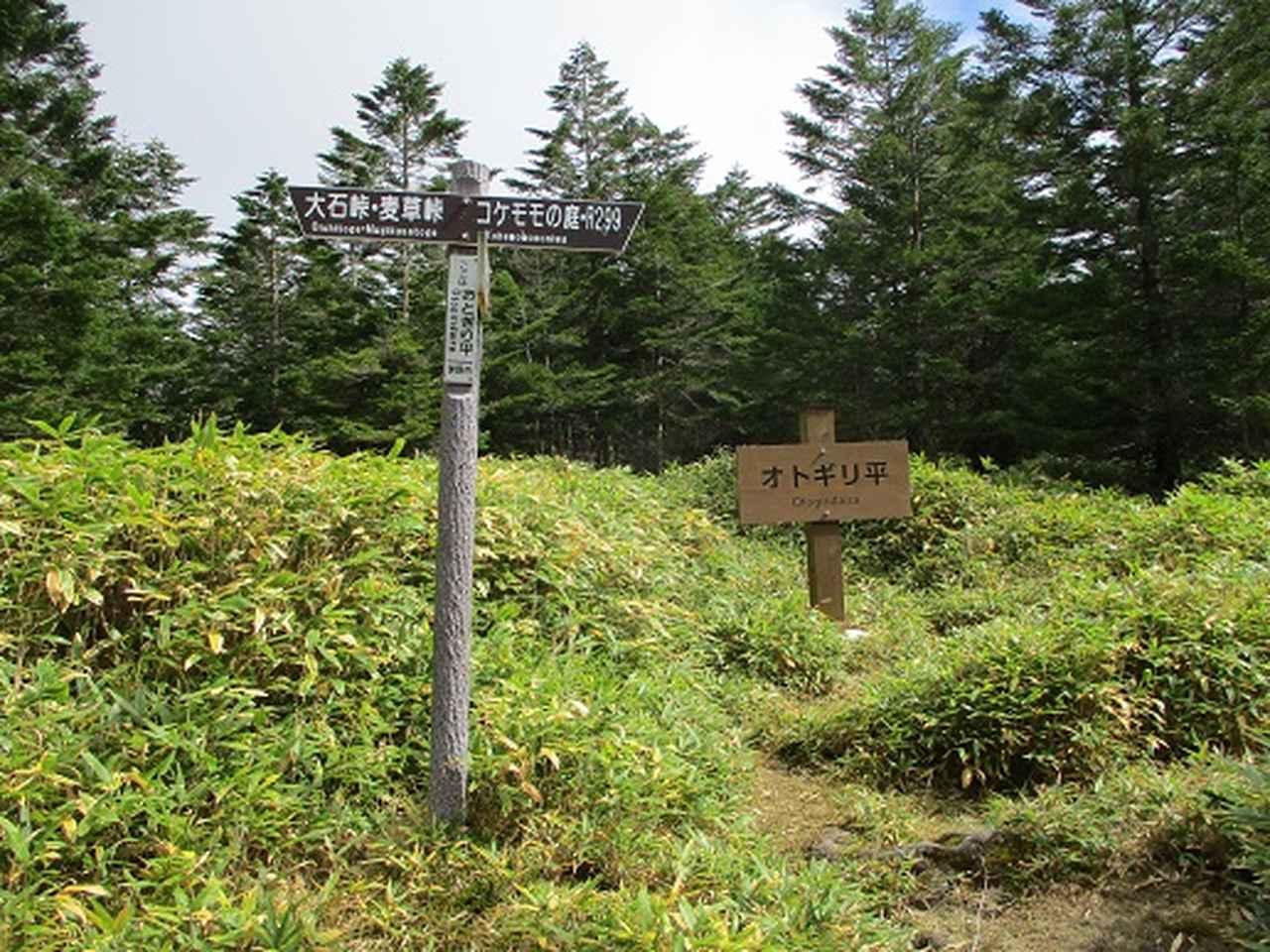 画像4: 【山旅会・登山ガイドこだわりツアー】岡田ガイドからの便り・麦草峠から五辻ツアーの下見にいってまいりました!