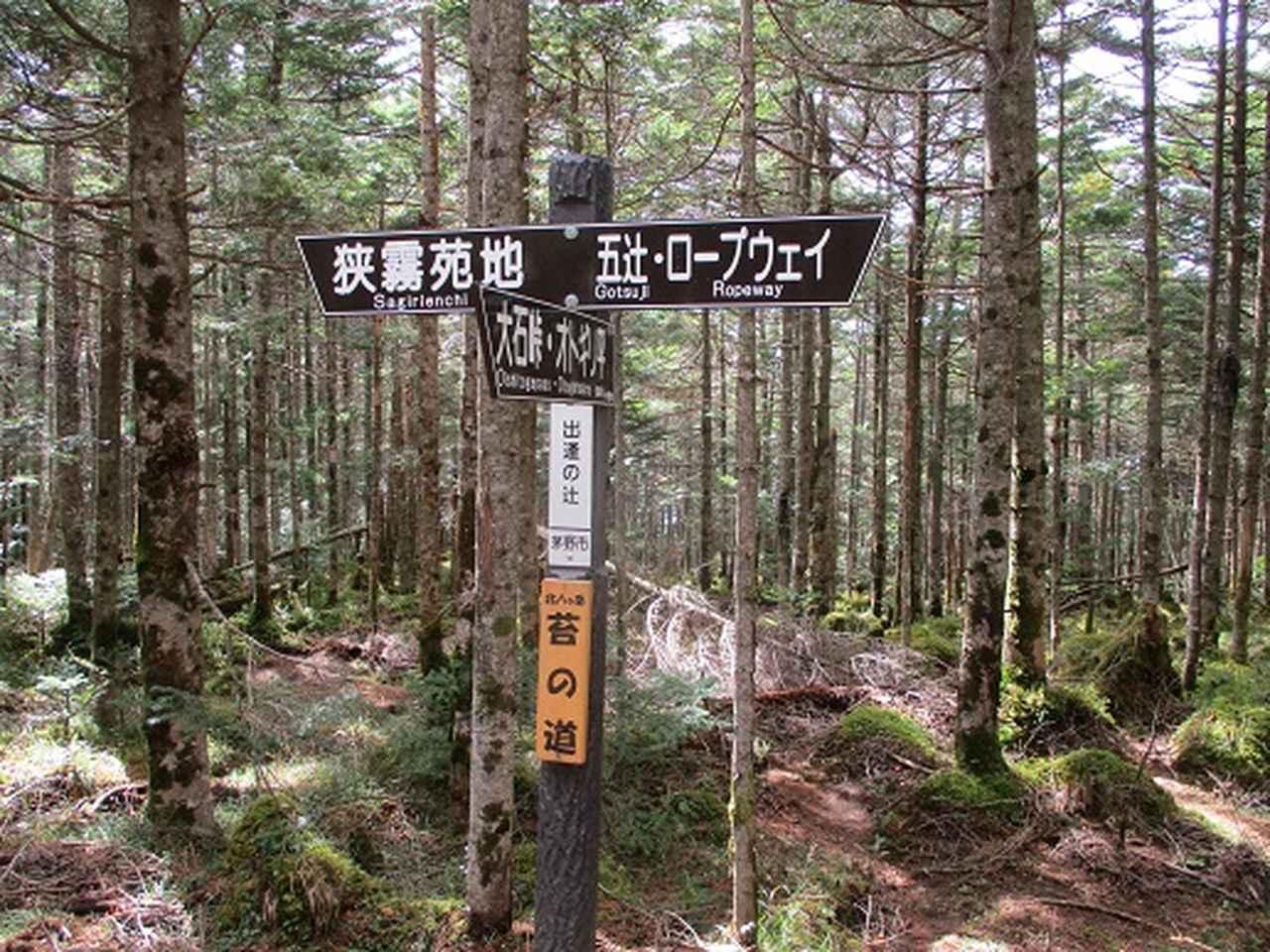 画像5: 【山旅会・登山ガイドこだわりツアー】岡田ガイドからの便り・麦草峠から五辻ツアーの下見にいってまいりました!