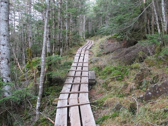 画像8: 【山旅会・登山ガイドこだわりツアー】岡田ガイドからの便り・麦草峠から五辻ツアーの下見にいってまいりました!