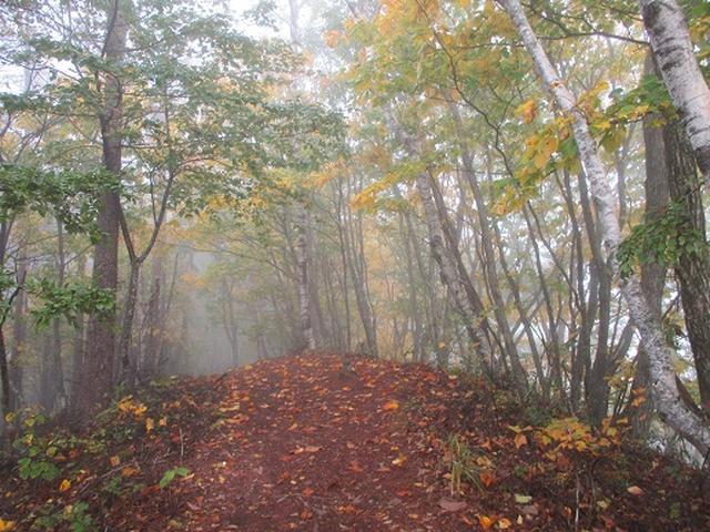 画像9: 【山旅会・登山ガイドこだわりツアー】岡田ガイドからの便り・守屋山の下見にいってまいりました!