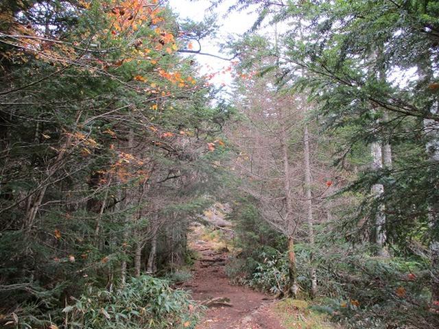 画像1: 【山旅会・登山ガイドこだわりツアー】岡田ガイドからの便り・麦草峠から五辻ツアーの下見にいってまいりました!