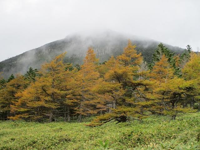 画像3: 【山旅会・登山ガイドこだわりツアー】岡田ガイドからの便り・麦草峠から五辻ツアーの下見にいってまいりました!