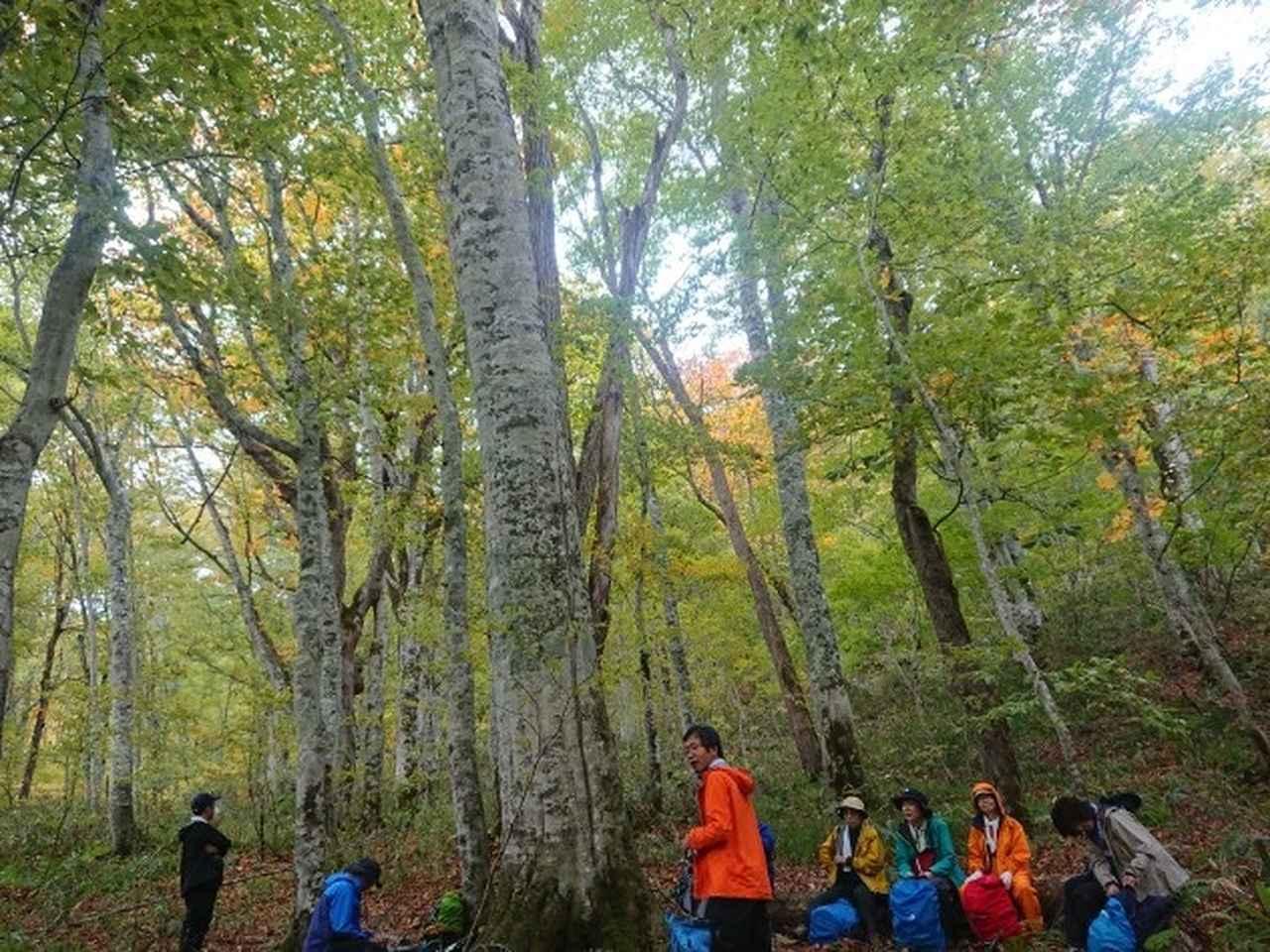 画像7: 【山旅会・登山ガイドこだわりツアー】添乗員からの便り・尾瀬沼から沼田街道