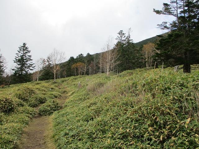 画像7: 【山旅会・登山ガイドこだわりツアー】岡田ガイドからの便り・麦草峠から五辻ツアーの下見にいってまいりました!