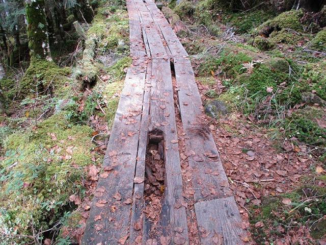 画像9: 【山旅会・登山ガイドこだわりツアー】岡田ガイドからの便り・麦草峠から五辻ツアーの下見にいってまいりました!