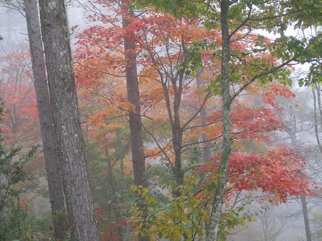 画像6: 【山旅会・登山ガイドこだわりツアー】岡田ガイドからの便り・守屋山の下見にいってまいりました!