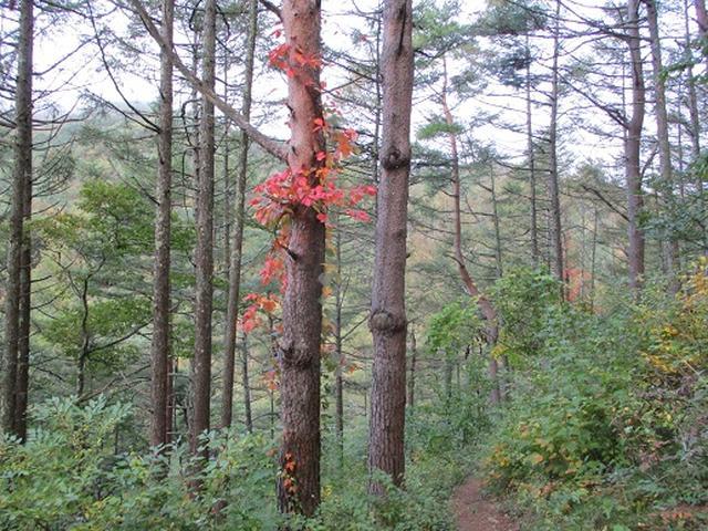 画像2: 【山旅会・登山ガイドこだわりツアー】岡田ガイドからの便り・守屋山の下見にいってまいりました!