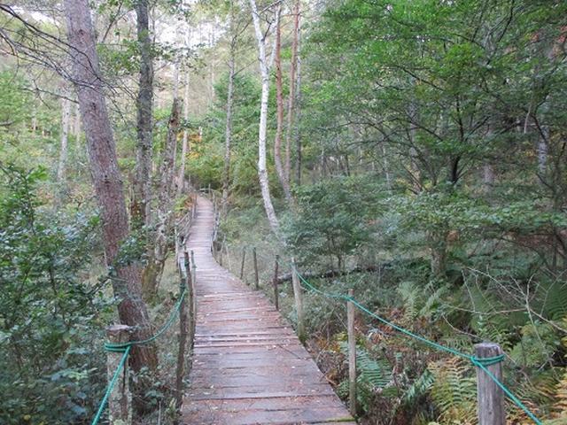 画像3: 【山旅会・登山ガイドこだわりツアー】岡田ガイドからの便り・守屋山の下見にいってまいりました!