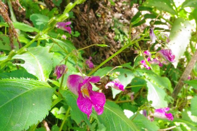 画像: 絞り値:f40で撮った花。手前の葉から花までピントが合っていて、奥の斜面の様子も(少しボケていますが)わかります。