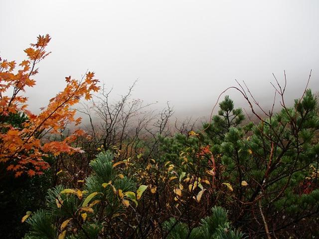 画像2: 【山旅会・登山ガイドこだわりツアー】岡田ガイドからの便り・那須ツアーにいってまいりました!(その2)