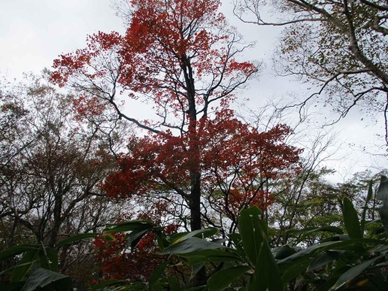 画像6: 【山旅会・登山ガイドこだわりツアー】岡田ガイドからの便り・那須ツアーにいってまいりました!(その2)