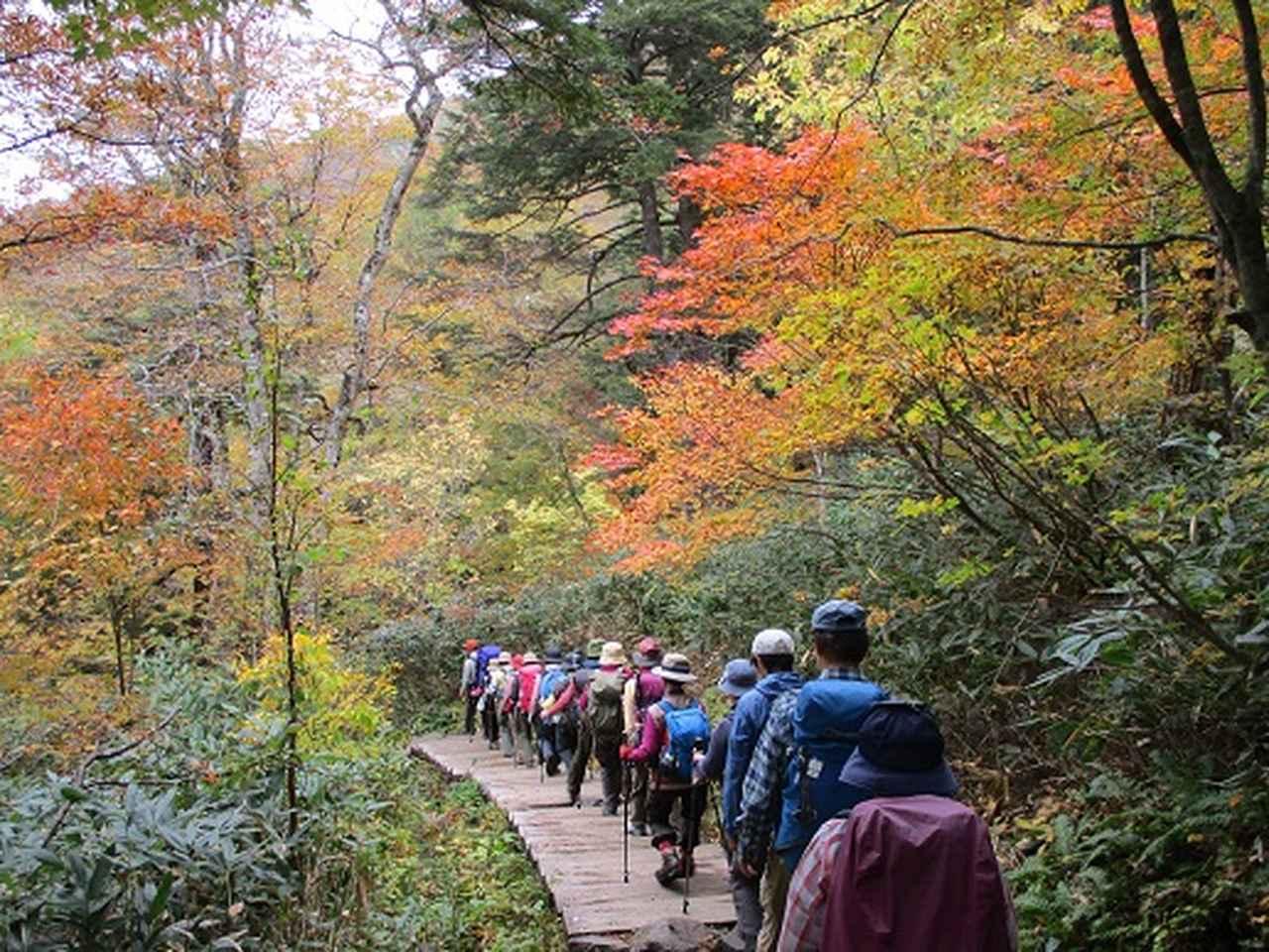 画像2: 【山旅会・登山ガイドこだわりツアー】添乗員からの便り・尾瀬燧裏林道ツアーにいってまいりました!(その1)