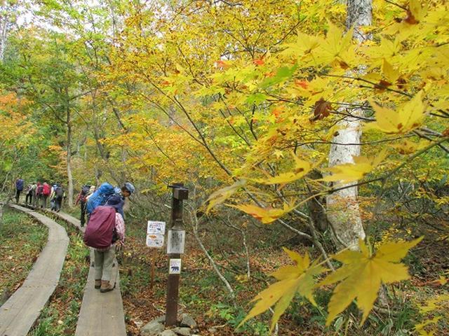 画像3: 【山旅会・登山ガイドこだわりツアー】添乗員からの便り・尾瀬燧裏林道ツアーにいってまいりました!(その1)