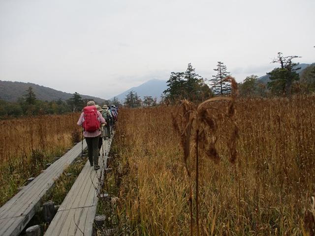 画像6: 【山旅会・登山ガイドこだわりツアー】添乗員からの便り・尾瀬燧裏林道ツアーにいってまいりました!(その1)
