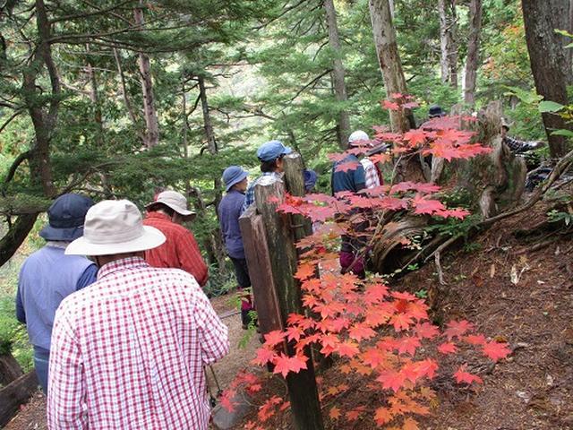 画像10: 【山旅会・登山ガイドこだわりツアー】添乗員からの便り・尾瀬燧裏林道ツアーにいってまいりました!(その2)