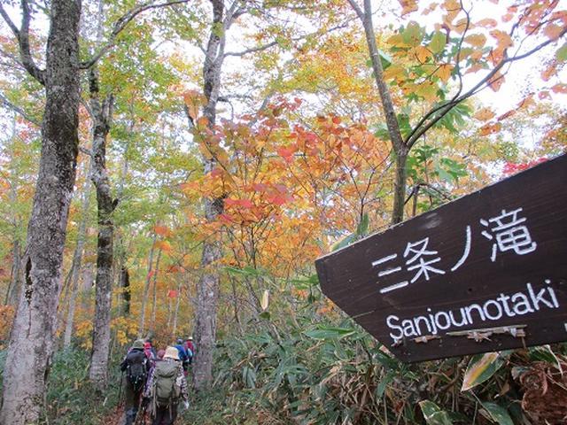 画像6: 【山旅会・登山ガイドこだわりツアー】添乗員からの便り・尾瀬燧裏林道ツアーにいってまいりました!(その2)