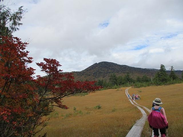 画像11: 【山旅会・登山ガイドこだわりツアー】添乗員からの便り・尾瀬燧裏林道ツアーにいってまいりました!(その3)