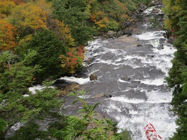 画像8: 【山旅会・登山ガイドこだわりツアー】添乗員からの便り・尾瀬燧裏林道ツアーにいってまいりました!(その2)