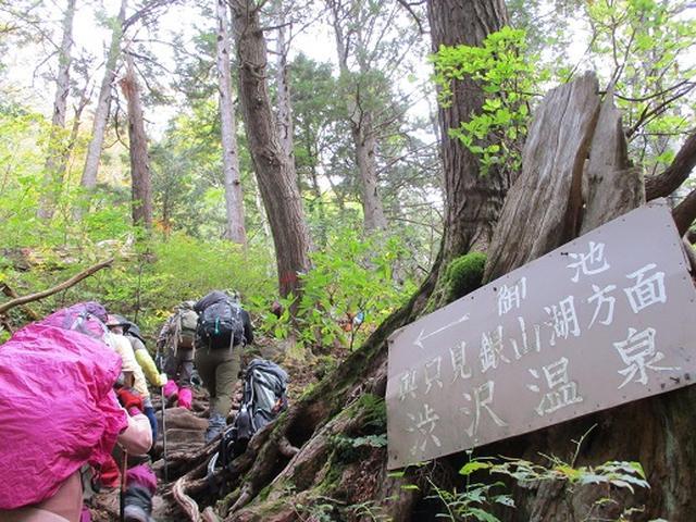 画像2: 【山旅会・登山ガイドこだわりツアー】添乗員からの便り・尾瀬燧裏林道ツアーにいってまいりました!(その3)