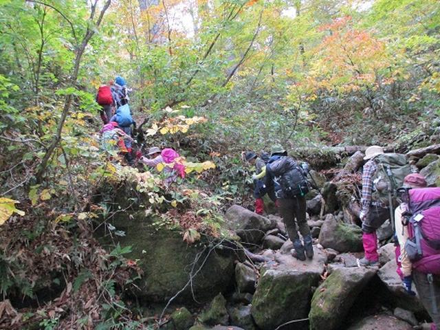 画像4: 【山旅会・登山ガイドこだわりツアー】添乗員からの便り・尾瀬燧裏林道ツアーにいってまいりました!(その3)