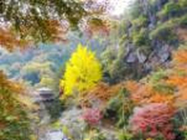 画像: <山旅会>『登山初級A 展望の尾根 足利行道山』【上野出発】|クラブツーリズム