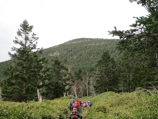 画像10: 【山旅会・登山ガイドこだわりツアー】添乗員からの便り・麦草峠から五辻、坪庭ツアーにいってまいりました!