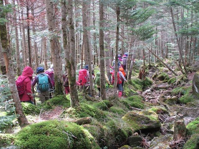 画像8: 【山旅会・登山ガイドこだわりツアー】添乗員からの便り・麦草峠から五辻、坪庭ツアーにいってまいりました!