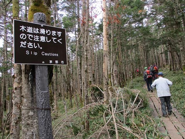 画像11: 【山旅会・登山ガイドこだわりツアー】添乗員からの便り・麦草峠から五辻、坪庭ツアーにいってまいりました!