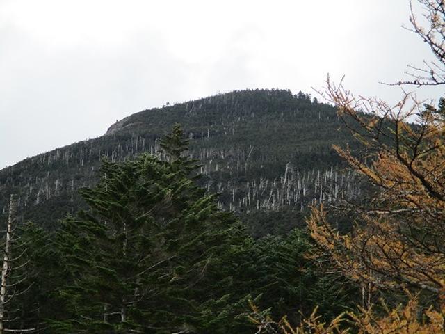 画像7: 【山旅会・登山ガイドこだわりツアー】添乗員からの便り・麦草峠から五辻、坪庭ツアーにいってまいりました!