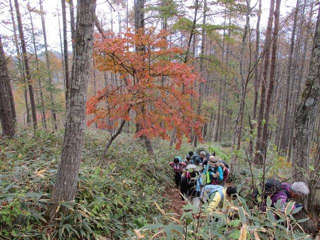 画像5: 【山旅会・登山ガイドこだわりツアー】岡田ガイドからの便り守屋山ツアーにいってまいりました!