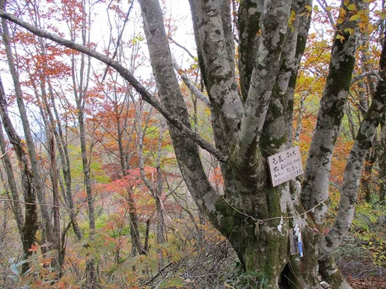 画像7: 【山旅会・登山ガイドこだわりツアー】岡田ガイドからの便り守屋山ツアーにいってまいりました!