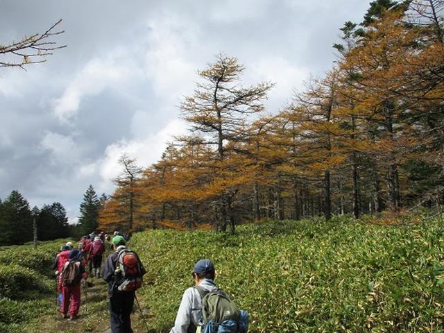 画像6: 【山旅会・登山ガイドこだわりツアー】添乗員からの便り・麦草峠から五辻、坪庭ツアーにいってまいりました!
