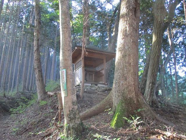 画像2: 【山旅会・登山ガイドこだわりツアー】岡田ガイドからの便り・浅間峠から生藤山ツアーの下見にいってまいりました!