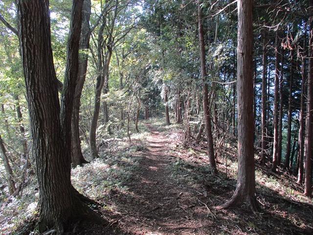 画像4: 【山旅会・登山ガイドこだわりツアー】岡田ガイドからの便り・浅間峠から生藤山ツアーの下見にいってまいりました!