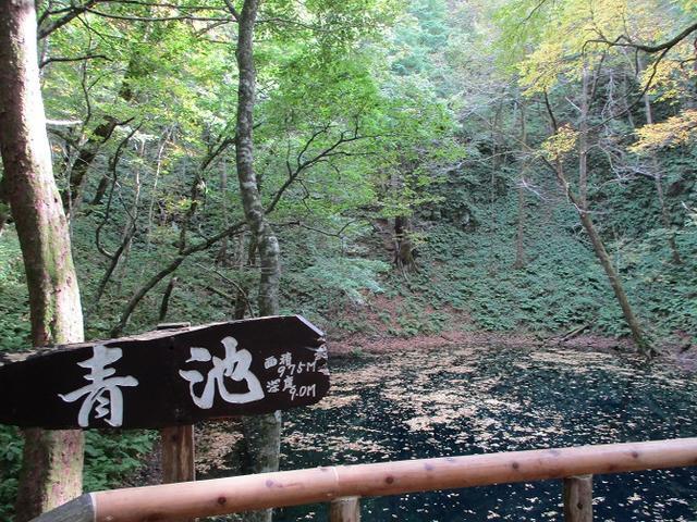 画像7: 【山旅会・登山ガイドこだわりツアー】添乗員からの便り・白神山地ツアーにいってまいりました!(その1)
