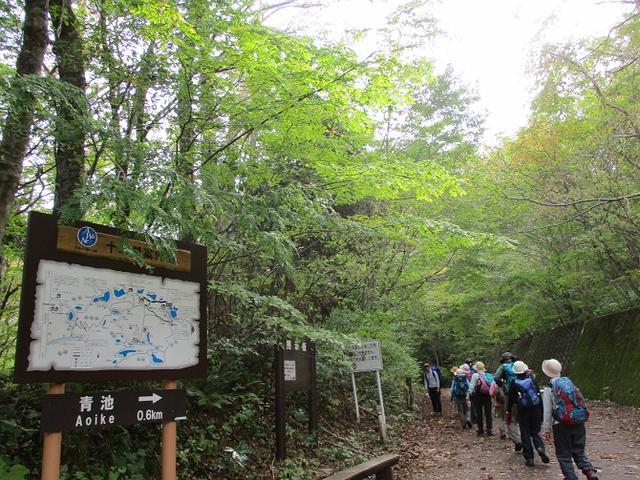 画像5: 【山旅会・登山ガイドこだわりツアー】添乗員からの便り・白神山地ツアーにいってまいりました!(その1)