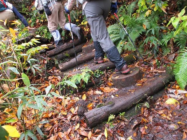 画像9: 【山旅会・登山ガイドこだわりツアー】添乗員からの便り・白神山地ツアーにいってまいりました!(その2)