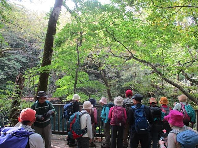 画像10: 【山旅会・登山ガイドこだわりツアー】添乗員からの便り・白神山地ツアーにいってまいりました!(その1)